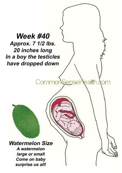 Week 40 Pregnancy Stages Picture