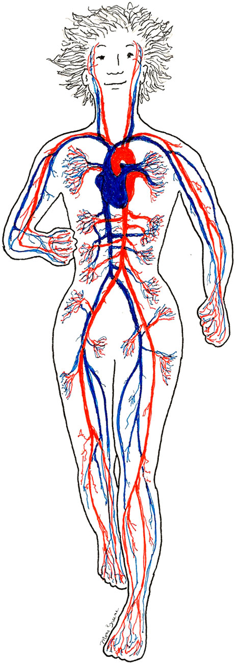 How to increase blood flow through the heart from commonsensehealth blood flow through the heart circulationbody ccuart Image collections