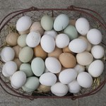 A basket full of multi colored eggs.